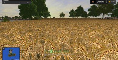 Ваше поле