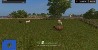 Остров с овцами