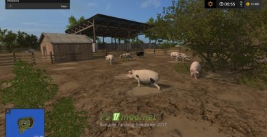 Остров со свиньями