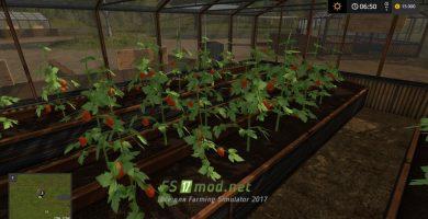 Теплица с помидорками